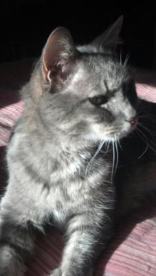 kelsey cat